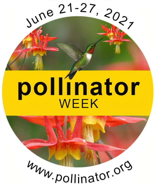 Celebrating #PollinatorWeek 2021