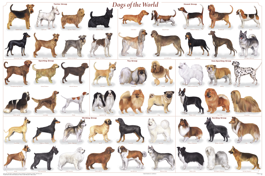 dogs_of_the_world_poster
