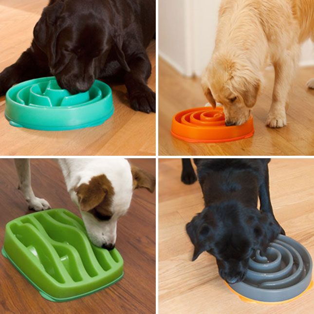 SloBowl-for-dogs