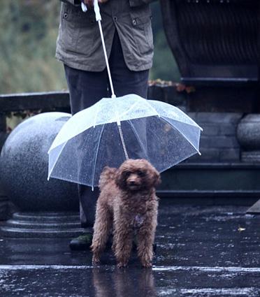 c57b_doggie_umbrella