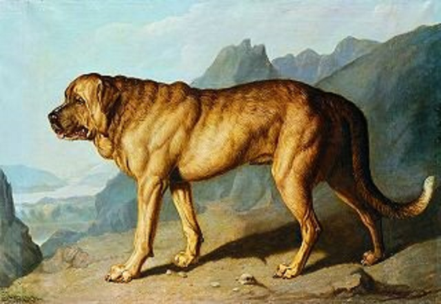 lion-alpine-mastiff