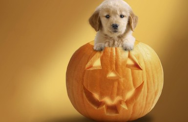 biscuits pumpkin dog