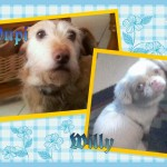 Pupy & Willy