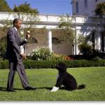 Bo y Obama