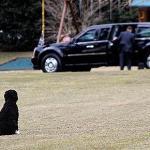 Vuelve pronto, Barack