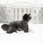 Bo en la Casa Blanca