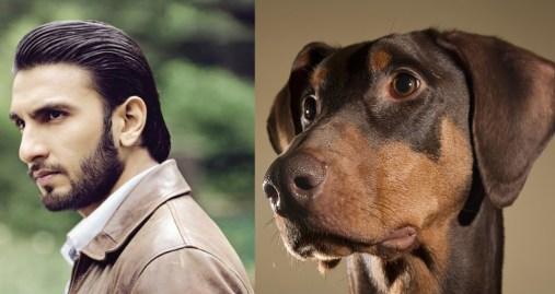 perros-que-se-parecen-a-sus-dueños