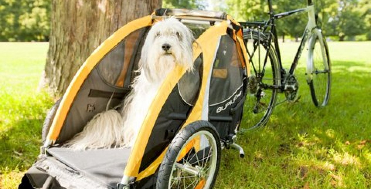 ride bike dog