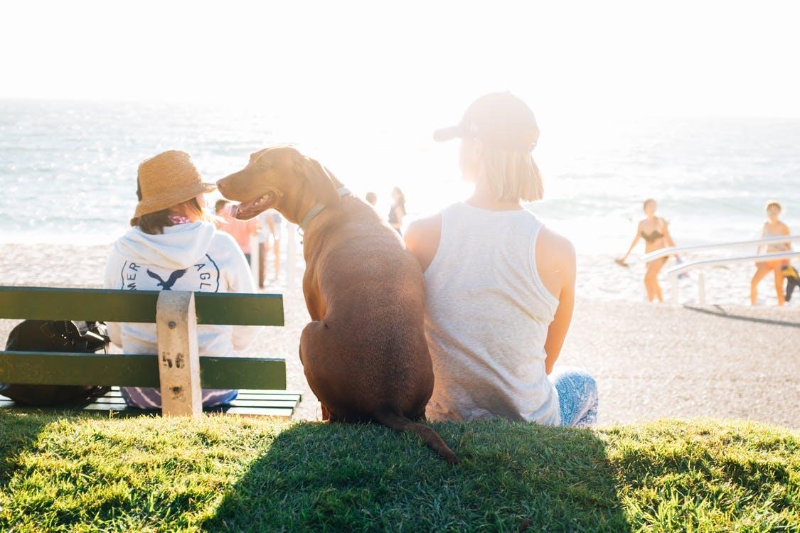 proteger a tu perro del sol