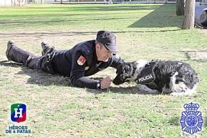 perros de trabajo heroes de 4 patas