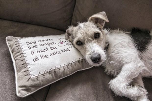 allergie chien canapé fauteuil