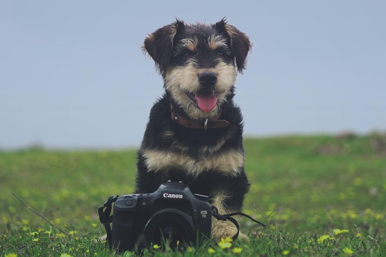 mejores fotos perros gudog