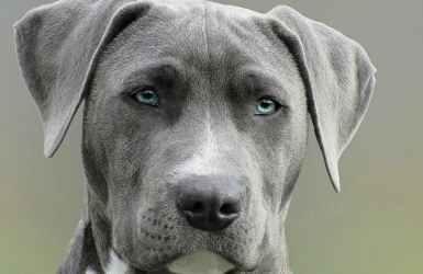 nombres de perro que empiezan por O