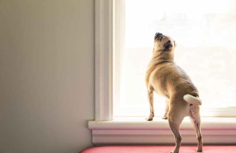 dia del perro blog