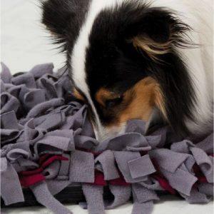 alfombra olfativa perro ansiedad por separación zooplus