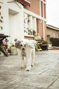 nombre de perro con p pibe