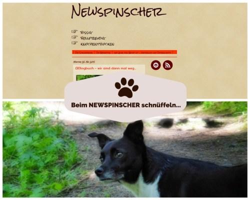 Newspinscher