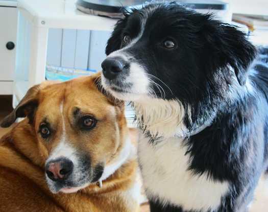 devenir dog-sitter