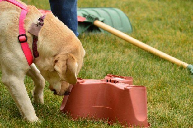 aider chien se dépenser exercice olfactif