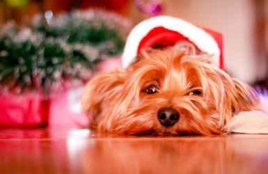 Où laisser mon chien pendant les vacances de Noël
