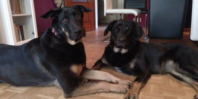 dualla et asli chien eduardo casas