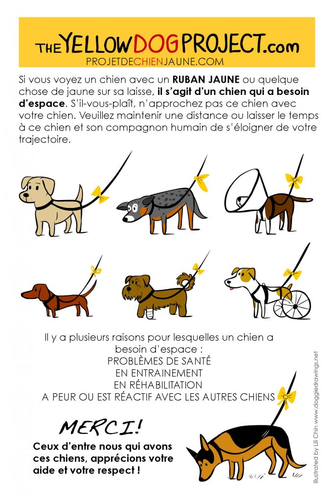 yellow dog project infographie