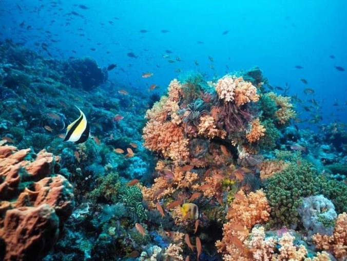 Environment of the Red Sea