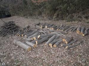 椎茸ほだ木
