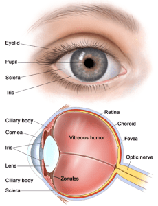 Anatomy of the Eye Hot Air Balooning