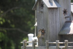 Tip 2: Birds do not nest in painted birdhouses.
