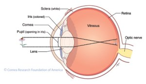 """Human sight is a complex sense composed of many complementary elements that work together.  The miraculous human eye, elegant in its detail and design, represents a gateway to vision."""
