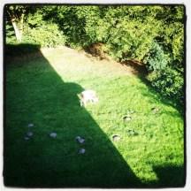 Besuch im Garten...
