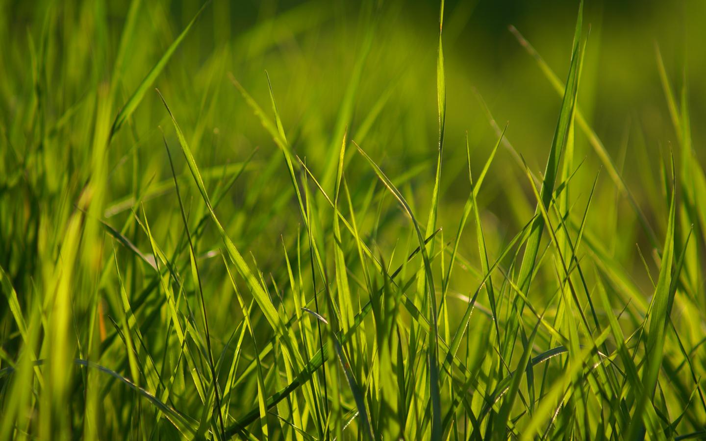 15 Pretty Hd Grass Wallpapers