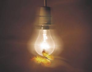 Moth and Night Light