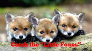 Catch the Little Foxes