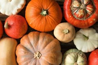 Mit unserer Kürbissorten Übersicht durch den Herbst