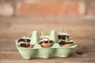 Herbs: DIY Seedlings with Eggshells