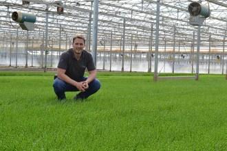 Our British Samphire Growers: Westlands Wow