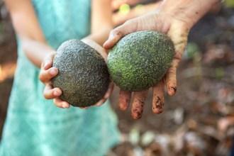 avocados-Del-Rey-Avocado-Fresh-From-The-Source-HelloFresh