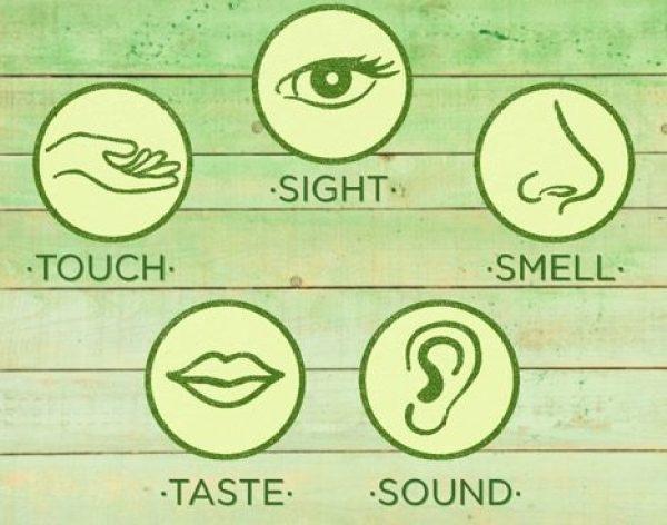 Taste-Training-Picky Eaters-HelloFresh-Kids-Rainbow-Senses-Sight-Touch-Taste-Sound-Smell