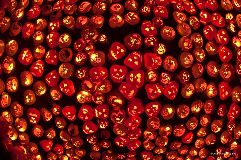 Pumpkin Corn Maze