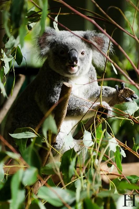 20120425-150903-Australia Zoo, Australien, Weltreise, Zoo-20120425-140903-Australia-Zoo-Australien-Zoo_DSC8949