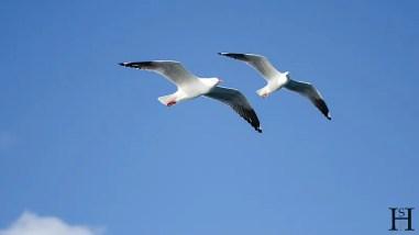 20120507-162228-Australien, Segeln, Weltreise, Whitsunday Islands-20120507-162228-Australien-Segeln-Whitsunday-Islands_DSC0401