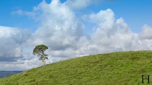 20120514-161456-Atherton Tableland, Australien, Weltreise-20120514-161456-Atherton-Tableland-Australien_DSC1584