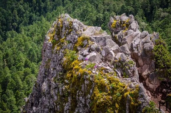 20120804-113106-Llano Grande, Mexiko, Ruta Piedra Larga, Sierra Norte, Weltreise-_DSC0812