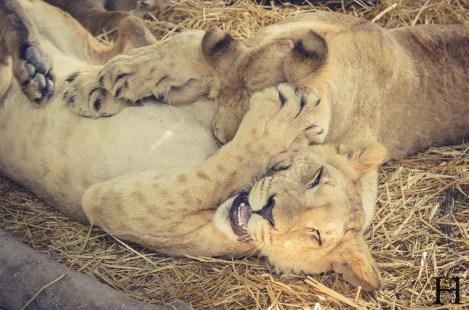 20121030-164556-Argentinien, Lujan, Weltreise, Zoo-_DSC8123