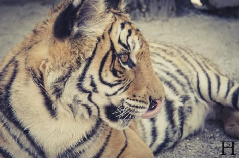 20121030-165059-Argentinien, Lujan, Weltreise, Zoo-_DSC8172