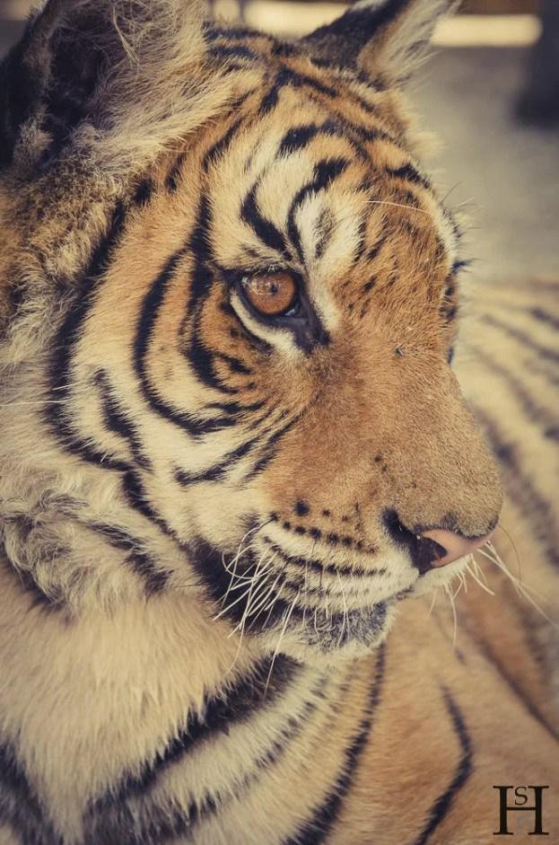 20121030-165107-Argentinien, Lujan, Weltreise, Zoo-_DSC8175