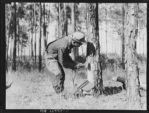 Turpentine worker. Georgia. U.S. Farm Security Administration/Office of War Information Black & White Photographs. Library of Congress.