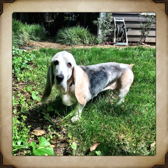 Emily D. Basset, Aug. 10, 1998 - May 23, 2014.